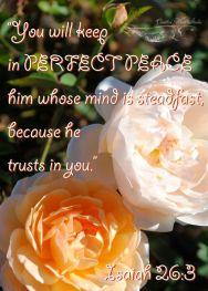 perfect peace1